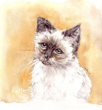 Chat blanc - Painting, ©2006 by Butterflymoons -