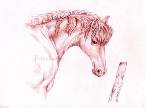 Cheval - Drawing,  8.3x11.4 in, ©2009 by Butterflymoons -