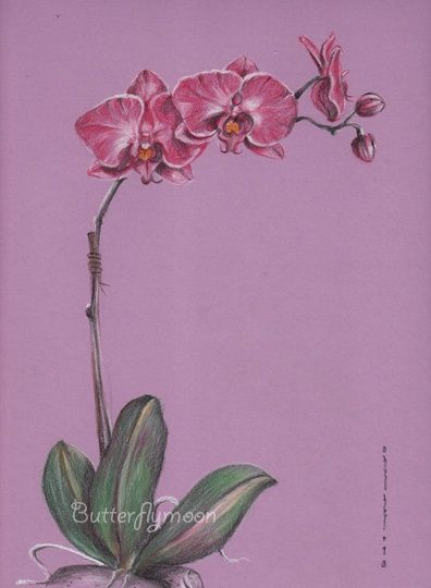 Orchidée - Drawing,  13.4x9.5 in, ©2010 by Butterflymoons -