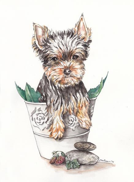 Yorkshire Terrier - Painting,  12.6x9.5 in, ©2011 by Butterflymoons -