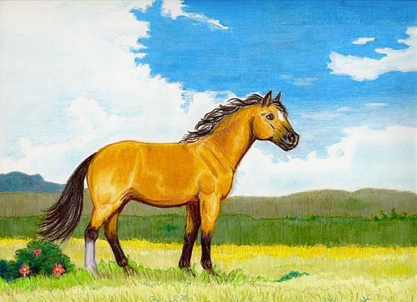 Little Horse on the Prairie - Drawing,  14x11 in ©2006 by Calzephyr -