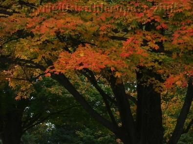 """Photography titled """"red autumn"""" by Kathleen Zinkovitch, Original Art,"""