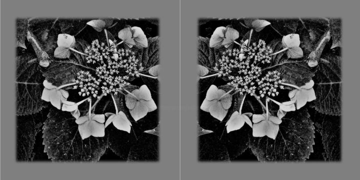 hiver-2.jpg - Digital Arts ©2018 by Catherine Rossi -