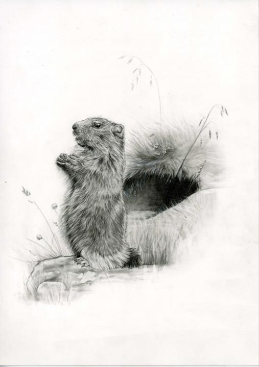 Marmotte - Drawing,  29x21 cm ©2005 by Cécile Aquisti -
