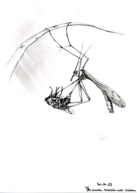Mouche-scorpion - Drawing,  29x21 cm ©2006 by Cécile Aquisti -