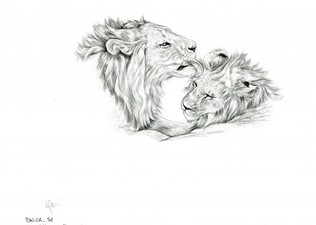 Lions - Drawing,  29x21 cm ©2006 by Cécile Aquisti -