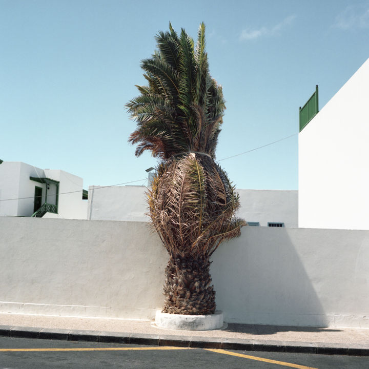 #01 - Photography,  19.7x19.7 in, ©2014 by Cédric Jalade -                                                                                                                                                          Cityscape, palmier, paysage urbain