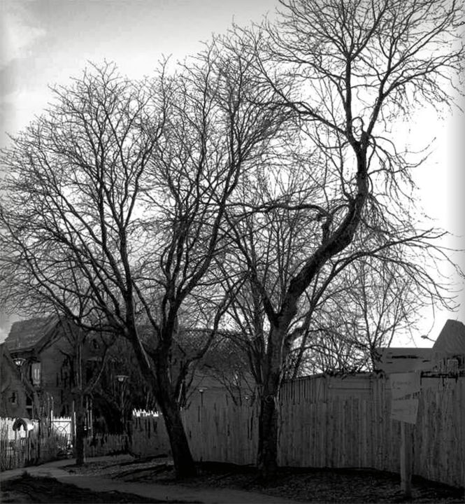 2 vieux amis - Photography,  7.7x7.1 in ©2016 by richard raveen Chester -                                            Environmental Art, Tree, arbre, maisons, , constructions, jardin, , nature, Black and White