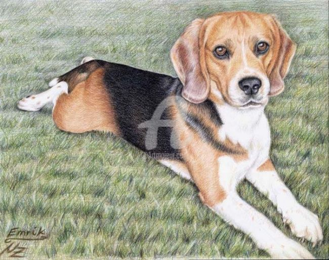 Beagle Emrik - Painting,  11.8x15.8 in, ©2008 by Arts & Dogs -                                                                                                                                                                          Figurative, figurative-594, beagle dog hund chien animal tier portrait colored pencil
