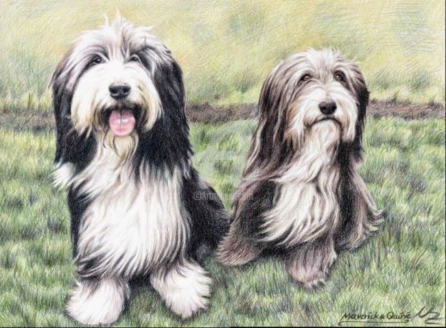 Bearded Collies - Painting, ©2008 by Arts & Dogs -                                                                                                                                                                          Figurative, figurative-594, dogs bearded collies hunde chien animal tiere fell fur beardies