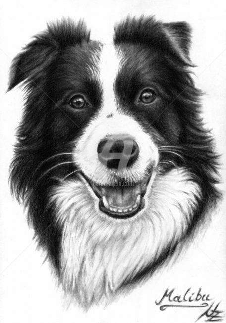 Border Collie - Painting,  11.8x7.9 in, ©2008 by Arts & Dogs -                                                                                                                                                                          Figurative, figurative-594, dog collie animal pet hund chien black fur border charcoal drawing portrait