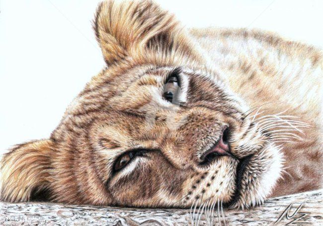 Tired Young Lion - Painting,  7.9x11.8 in, ©2009 by Arts & Dogs -                                                                                                                                                                          Figurative, figurative-594, Drawing of a young tired lion