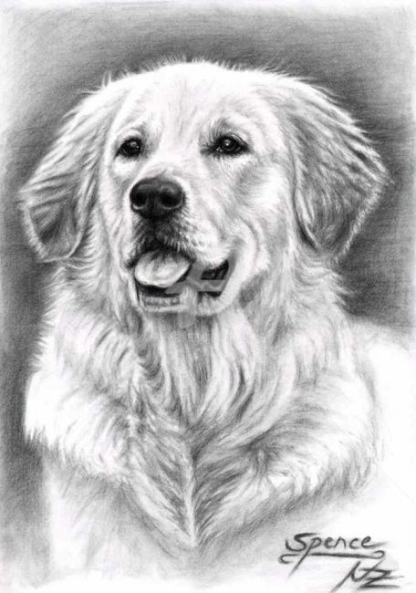 Golden Retriever Spence - Painting, ©2009 by Arts & Dogs -                                                              Drawing of a portrait Golden Retriever