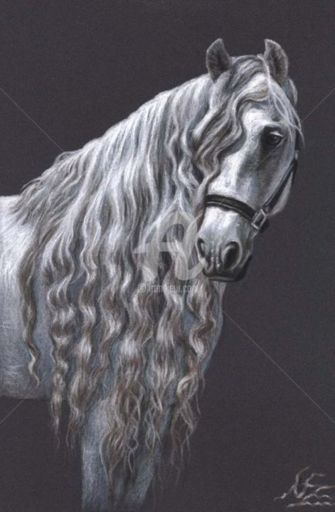 Andalusian Horse - Painting, ©2013 by Arts & Dogs -                                                                                                                                                                                                                                                                                                                                                                                                                                                                                                                                                                                                                                                                                                                          Figurative, figurative-594, pferd, horse, zeichnung, drawing, portrait, porträt, tier, animal, cheval, mane, stallion, mare, andalusier