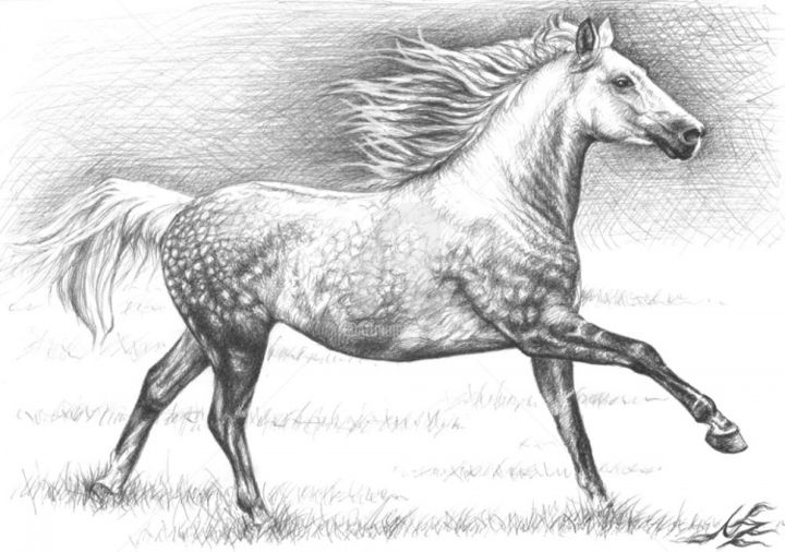 apfelschimmel - Painting, ©2013 by Arts & Dogs -                                                                                                                                                                                                                                                                                                                                                                                                                                                                                                                                                                                                                                                                                                                          Figurative, figurative-594, pferd, horse, zeichnung, drawing, portrait, porträt, tier, animal, cheval, mane, stallion, mare, andalusier