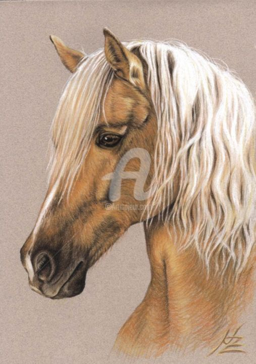 Berber Horse - Painting, ©2013 by Arts & Dogs -                                                                                                                                                                                                                                                                                                                                                                                                                                                                                                                                                                                                                                                                                                                          Figurative, figurative-594, pferd, horse, zeichnung, drawing, portrait, porträt, tier, animal, cheval, mane, stallion, mare, berber
