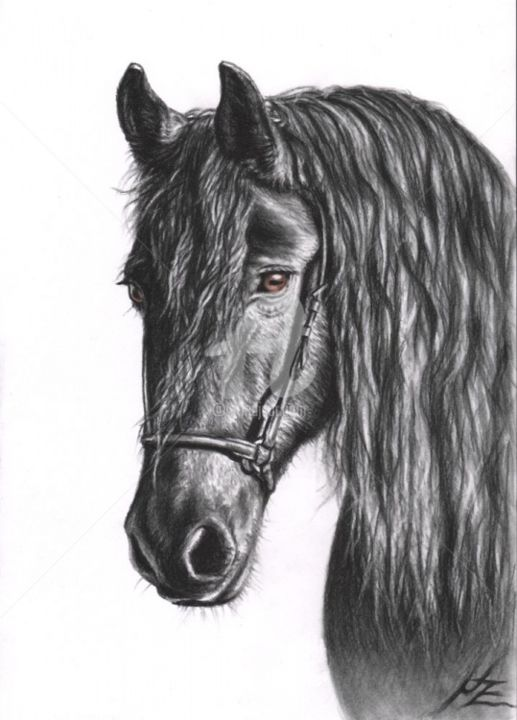 Friesian Horse - Painting, ©2013 by Arts & Dogs -                                                                                                                                                                                                                                                                                                                                                                                                                                                                                                                                                                                                                                                                                                                          Figurative, figurative-594, pferd, horse, zeichnung, drawing, portrait, porträt, tier, animal, cheval, mane, stallion, mare, friese