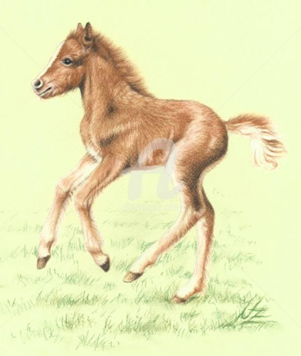 fuchs-pony - Painting, ©2013 by Arts & Dogs -                                                                                                                                                      pony, horse, foal