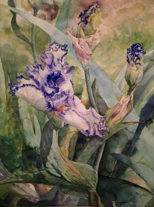 Iris 'Bold Print' - Painting,  24x17.9 in, ©2019 by CHINAMI MIYATA -                                                                                                                                                                                                                                                                                                                                                                                                                                                                                                                                                                                          Figurative, figurative-594, Flower, Watercolor, Acquerello, Artefigurativa, Iris, Botanico, Carta, Natura, Pittura, Fiore