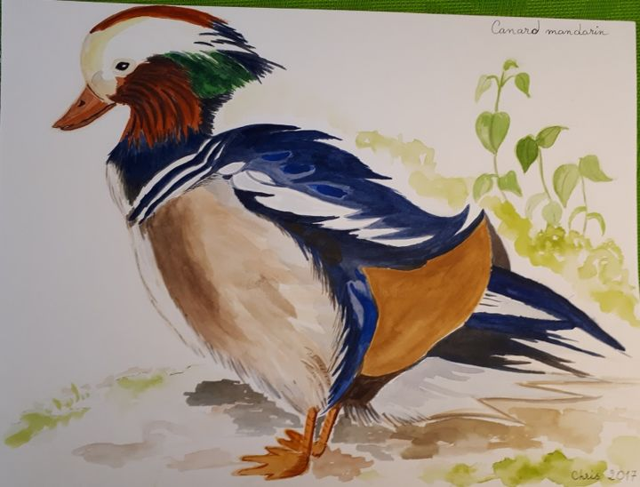 le canard mandarin - Painting,  9.5x11.8 in, ©2017 by Chris Texier -                                                                                                                                                                                                                          Figurative, figurative-594, Birds, canard mandarin