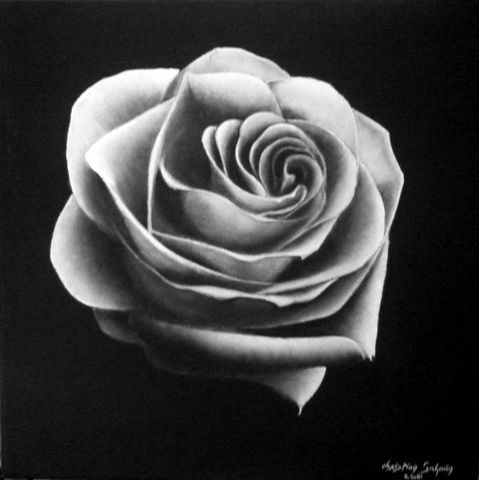 Rose Blanche Painting By Christian Salaun Artmajeur