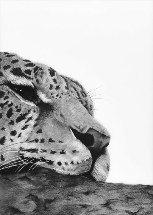 Drawing, graphite, hyperrealism, artwork by Claire Vogel