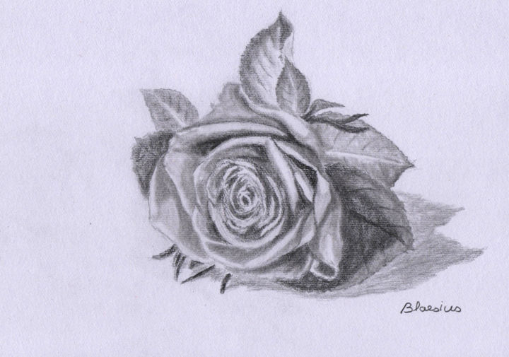 Rose Drawing By Claude Blaesius Artmajeur