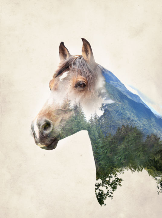 Wild Soul - Photography ©2018 by Clémence Aresu -                                                                                Photorealism, Animals, Horses, Garden, Nature, cheval, nature, forêt, double exposition, horse, forest, double exposure, animal, sauvage, wild, âme, soul
