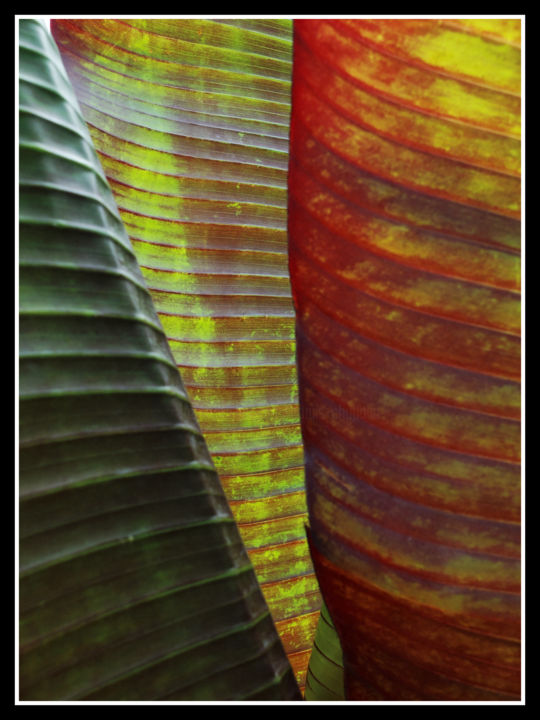 transparence02.jpg - Photography ©2018 by Chupalia -                                        Abstract Art, Art Deco, feuille, palmier, nervure, nature