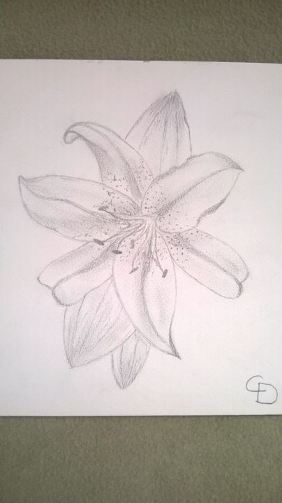 Lys Drawing By Corinne Dallinger Artmajeur