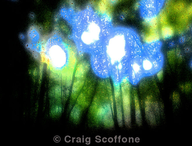 """Photography titled """"H Cowell #64"""" by Craig Scoffone, Original Art, Digital Photography"""