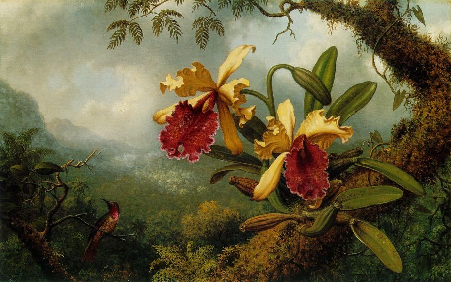 martin-johnson-heade-orchids-and-hummingbird-atc.jpg