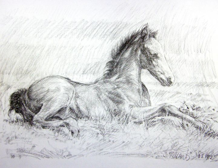 équidé 1992 1 (7) - Drawing,  19.7x25.6 in, ©1992 by CHRISTIAN ROLLAND -                                                                                                                                                                                                                                                                                                                                      dessin, fusain, étude, poulain, drawing, horse, charcoal