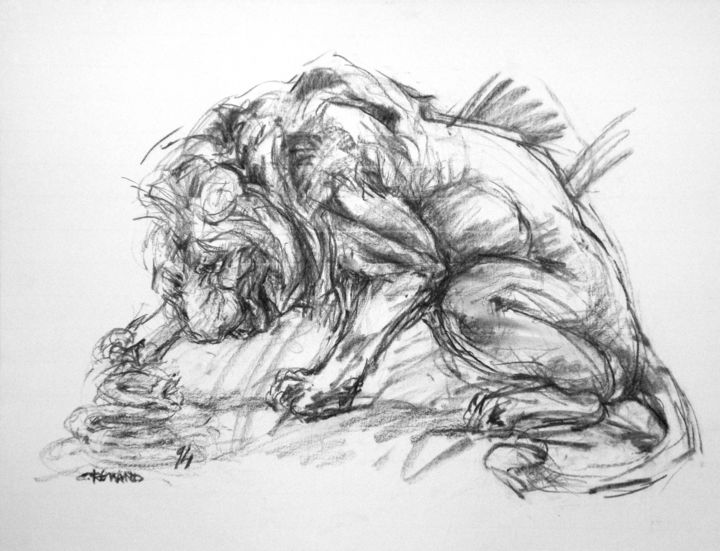 fusain 1994 9 - Drawing,  19.7x25.6 in, ©1994 by CHRISTIAN ROLLAND -                                                                                                                                                                                                                                                                                                                                      dessin, fusain, animal, étude, drawing, charcoal, lion