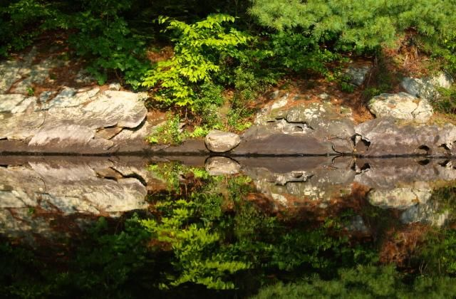 Reflecting - Photography,  10x8 in ©2009 by Cynthia Brown Yackenchick -            Reflection of waters edge on Upper Goose Pond