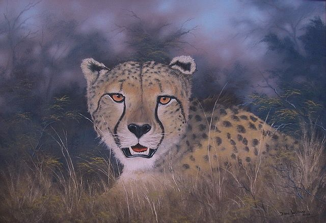 Cheetah Study - Painting,  90x65 cm ©2012 by Dane Willers -                            Realism, Oil on Canvas