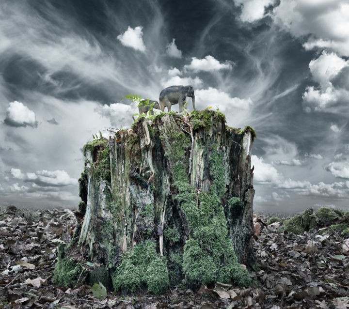 """Photography titled """"A Bit of Wilderness…"""" by David Heger, Original Art, Manipulated Photography"""