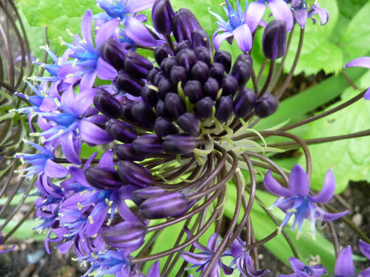 """Photography titled """"Close Up of Purple…"""" by Deanna Che Lyn, Original Art, Digital Photography"""