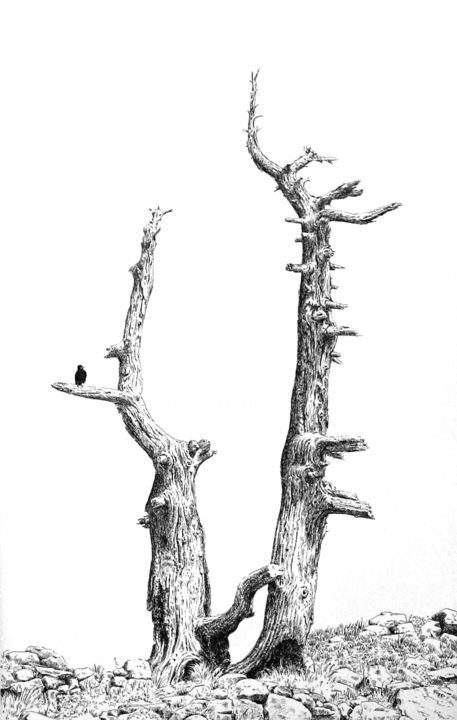 Chocard sur diapason - Drawing,  20.5x13 in, ©2014 by Pierre Fabry -                                                                                                                                                                                                      Tree, chocard, lac Achard, troncs d'arbres