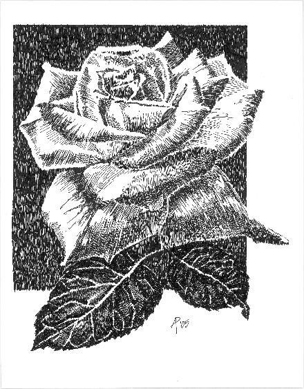 The rose drawing 14x11 in arra by mish p black and white