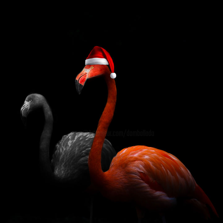 Don't tell me how to fucking feel - Photography, ©2020 by Dodi Ballada -                                                                                                                                                                                                                                                                                          birds, flamingos, #dodiballadaart, Dodi Ballada art, digital painting, digital art