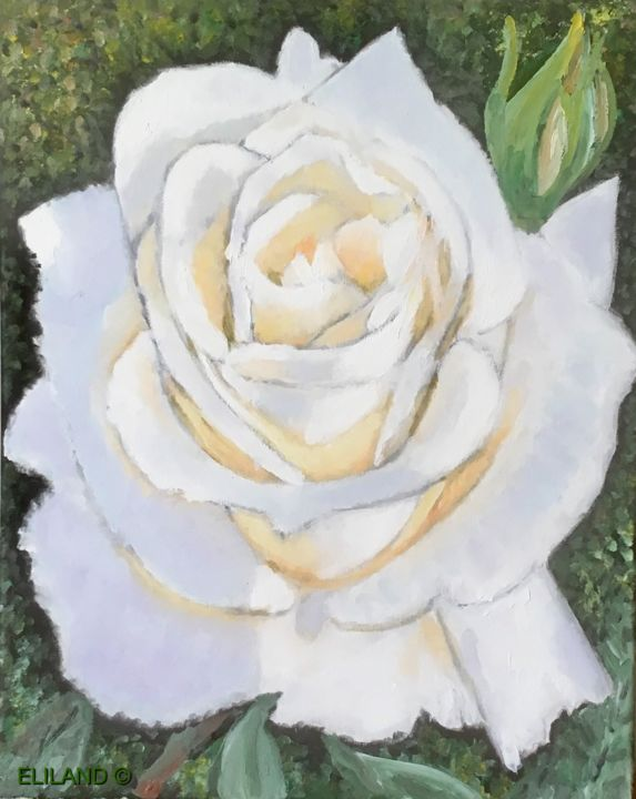 Rose Blanche Painting By Eliland Artmajeur