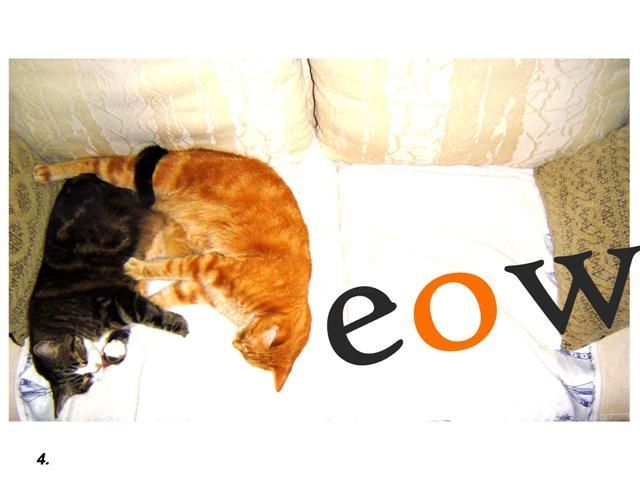 """Photography titled """"Meow"""" by Elise Stanley, Original Art,"""