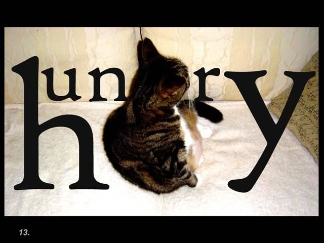 """Photography titled """"hungry"""" by Elise Stanley, Original Art,"""