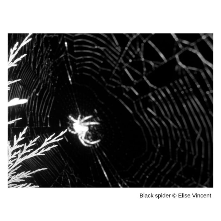 black-spider-elise-vincent.png