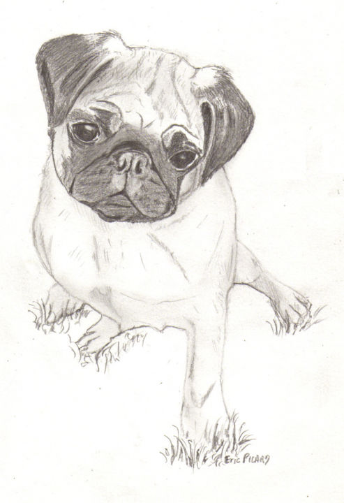 Chien Carlin 090825 1439 Fnd Modele 01 Dessin 01 Jpg Painting By