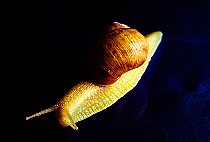 """Photography titled """"hurry up the snails"""" by Emil Iustinian Colban, Original Art, Non Manipulated Photography"""
