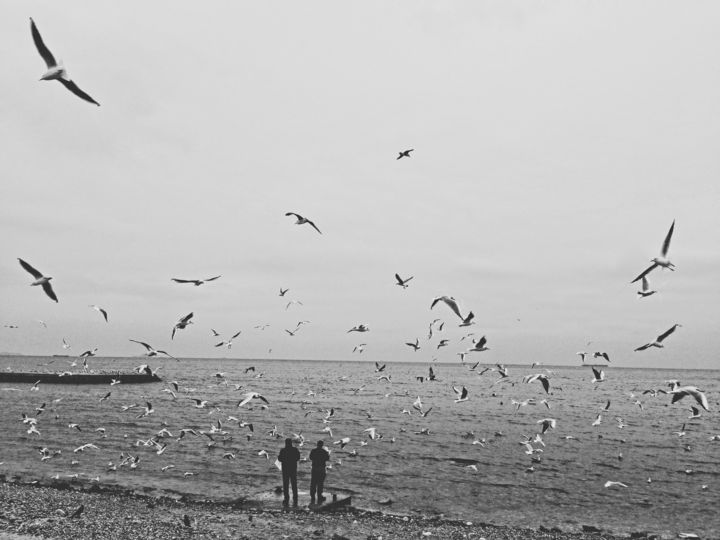 Birds - Photography, ©2019 by Eyup Ersin -                                                                                                                                                                                                  seagulls, birds, black and white, bw
