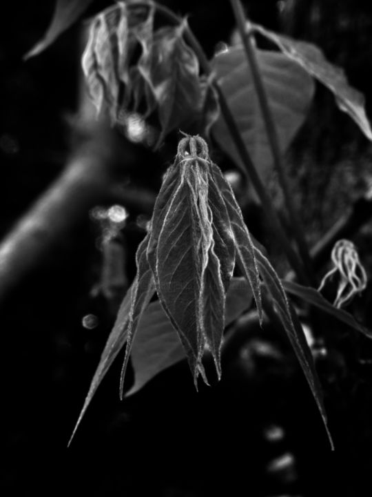 The Leafmen (1) - Photography ©2018 by fabrizzio -                                                                                                    Expressionism, Surrealism, Fairytales, Dark-Fantasy, Fantasy, Mortality, Nature