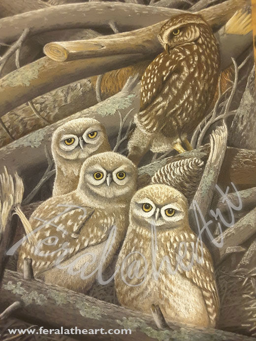 """Painting titled """"Mother Morepork and…"""" by Steve Robinson, Original Art, Pastel"""